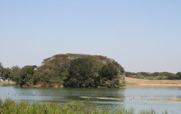 Assoreamento na Pampulha criou ilhas de terra firme com vegetação no meio da lagoa - Imagem: Acervo Projeto Manuelzão