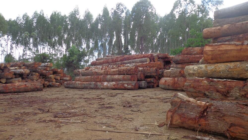 pátio de estocagem da madeira retirada da área onde extrativistas realizaram o empate / Foto: Rogério Almeida