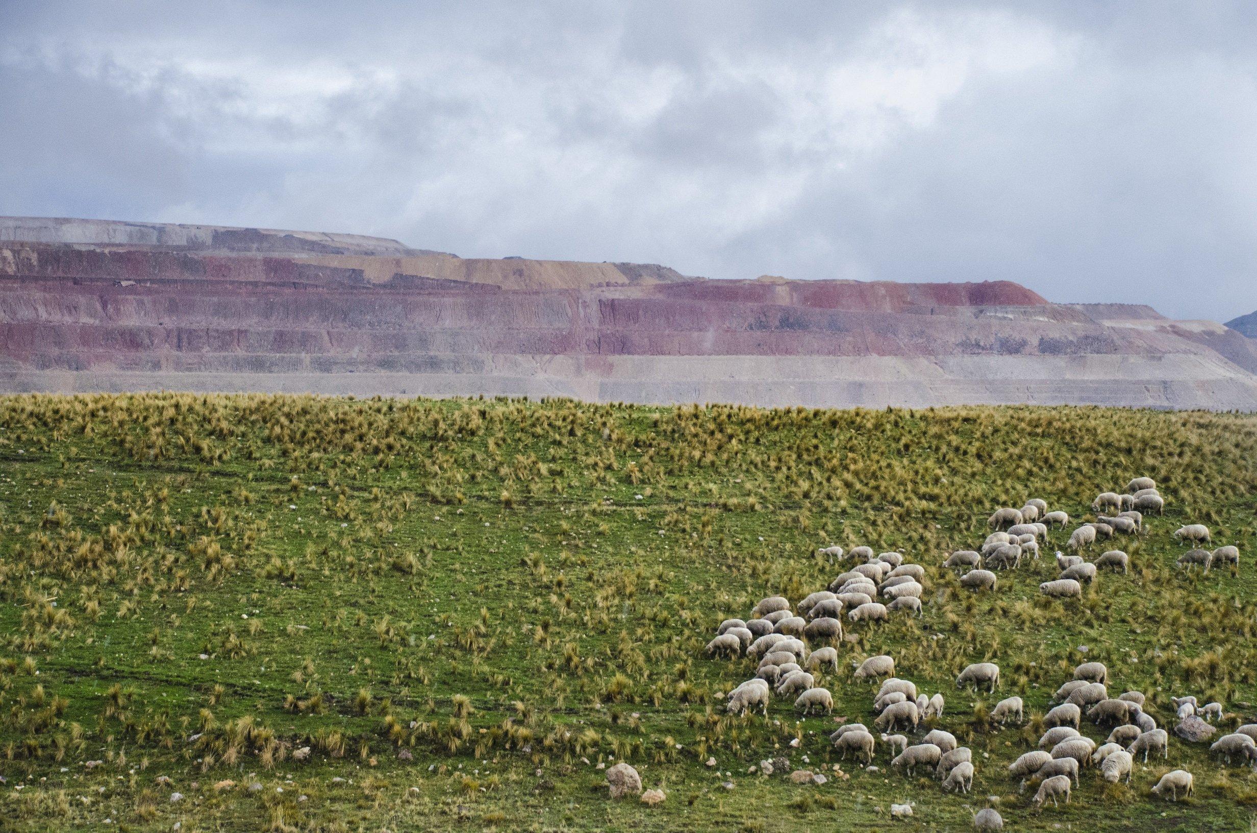 7 – Ovelhas pastam à sombra da mina. Os resíduos tóxicos de substâncias usadas na exploração do ouro escorrem montanha abaixo e contaminam os cursos d'água que abastecem as famílias, suas plantações e seus animais. (Foto: Ben Hallman / The Huffington Post)